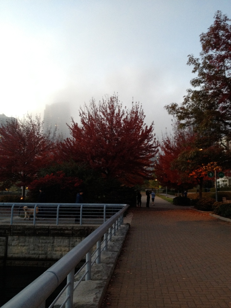 Love the fog and colourful leaves